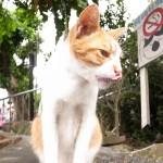 貓村一日遊